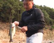 《DNE去路亚》如何使用清道夫shad作钓产床上的鲈鱼