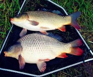 學會這個技巧,秋季征服鯉魚沒問題!