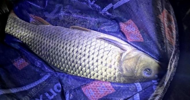 清明时节一个人的狂欢,大鱼总是留给有准备的人!