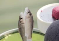 冬季钓鱼也要学会钓浮 别老守深水钓底啦!