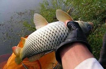 找到一个好的鱼窝 你的作钓就成功了一半!