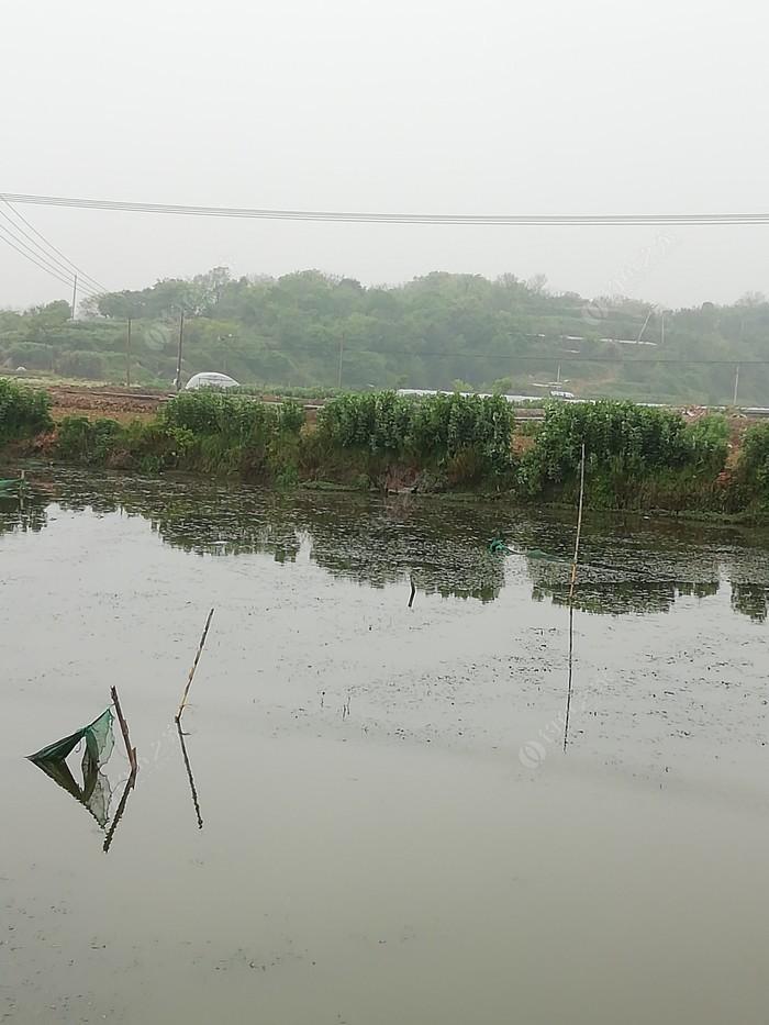 晚稻岙长河