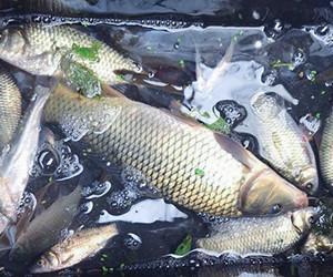 掌握這幾招釣鯉技巧 即使冬天也不是問題!