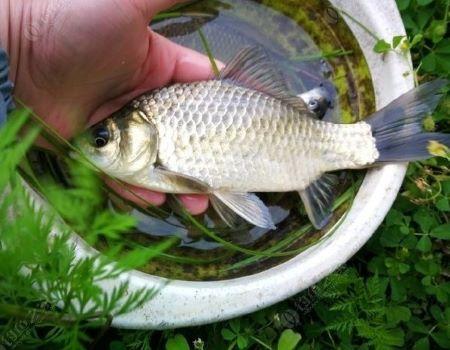 【春钓】风里雨里五六好友齐钓鱼,鱼获不同情谊颇深