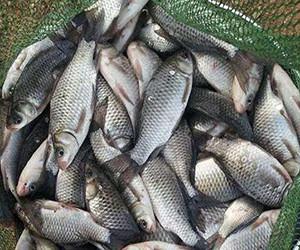 冬季魚兒藏得深,這幾點教你輕松找到魚窩!