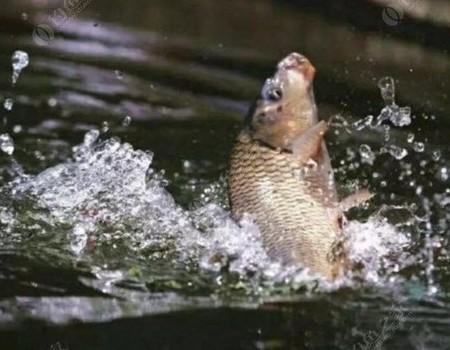 鱼钩的选择 使用 弃用 谈谈如何才能增强鱼钩在垂钓时的杀伤力