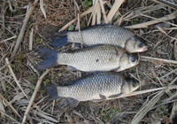 冬季釣魚學會這3個技巧,遠離空軍沒商量!