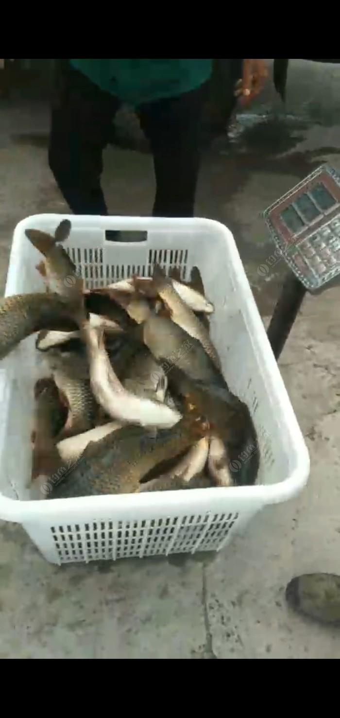金鳞台钓鱼塘