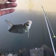 再议飞铅钓:搞懂其优劣势,面对针对鱼情时,方可爆护