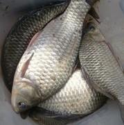"""【釣技全解第一期】深究釣魚""""7大忌"""",都是影響魚獲的重要因素"""