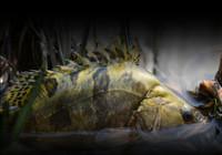 路亚鳜鱼很是实用的几个小知识!