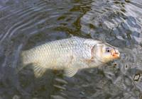 冬季钓鱼必须牢记的三钓三不钓!