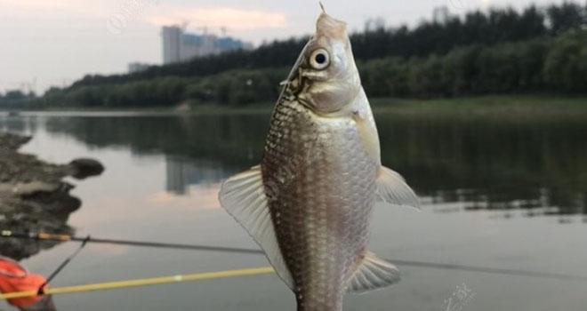 漫天秋色寒潮襲,心有暖陽去釣魚