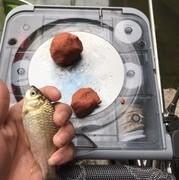如何让窝点鱼上鱼不断,这几点补窝技巧要牢记,合理运用才能爆护