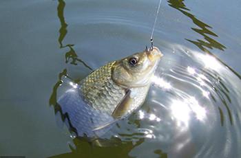 冬季鱼口轻钓顿不钓灵,原来是这个原因!