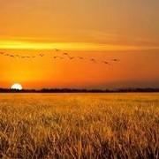 小麦收获的季节,钓鱼的瓶颈时期