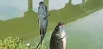 经验分享~掌握好鱼类喜欢的生活环境,必能爆护