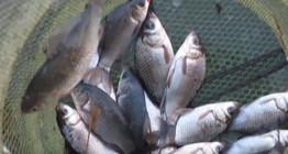 《户外野钓视频》 草边玩传统钓,这鱼也太好钓啦,七星漂稍微一动就中鱼