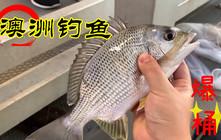 《全球钓鱼集锦》澳洲的钓鱼资源太好了,一个小时居然都能钓爆桶!