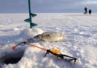 冬季靈活作釣必備的三招技巧!