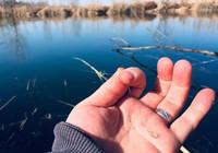 冬季釣鯽魚如何避小釣大!
