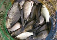 冬季野釣必備的作釣技巧!