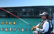 《全球钓鱼集锦》下面的鱼有多大,到底是什么鱼这样都拉不起來?