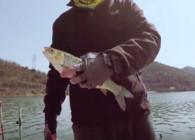 《麥子釣魚》釣魚實戰 水庫風推大浪 深水底釣赤眼鱒