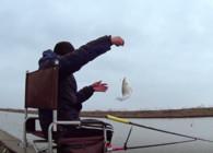 《麦子钓鱼》钓鱼实战 走水钓鱼 诚博国际 鲻鱼连竿拔 爆鱼桶