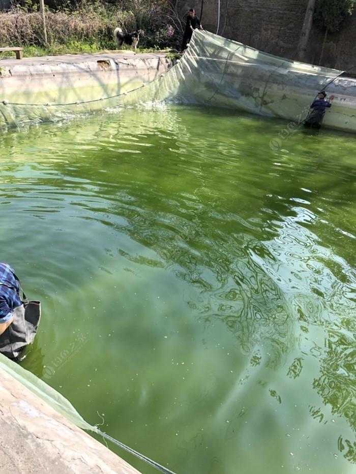钓鱼沟私人定制小炮塘