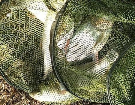 夏季好过手瘾的鱼种之一――鲢鳙