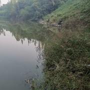 巨野河里戲野鯽,娛者娛漁魚吃相趣味橫生