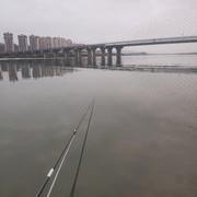 东江钓鲤鱼技巧,野钓鲤鱼真的没有这么难