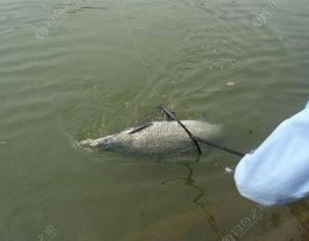 釣鯽魚,遇到下到情況,改釣浮。