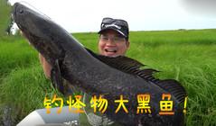 《藍旗魚路亞》在北大荒濕地,劃船釣怪物大黑魚!