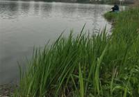 三春钓鱼也有不同讲究!