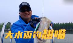 《藍旗魚路亞》潘安湖釣翹嘴,大水面如何用鲌客高效搜索?