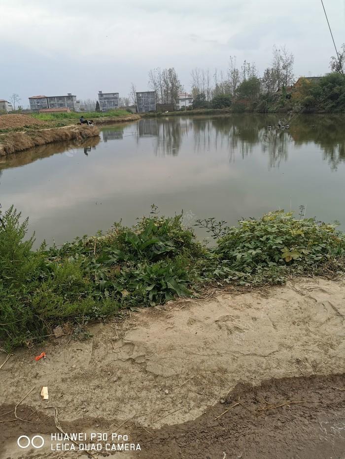 顿岗原塘鱼垂钓园