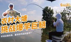 《白条游钓》农村大塘藏大鱼,白条会和钓友一样断竿切线吗?