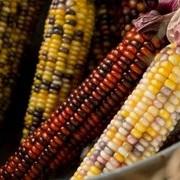 玉米是钓大鱼利器,这些才是利用玉米钓大鱼的正确方法