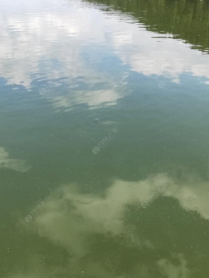 游仙镇钓鱼塘
