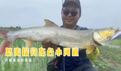《浔鱼问道》怒涛探钓东台小河道,小鳡鱼追的很猛!