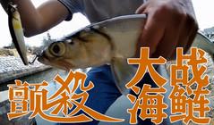 《DNE去亚洲AV无码兔费综合》钓鱼不能停,颤杀爆钓海鲢!