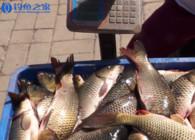 《釣魚百科》第144集 什么是腐敗塘?