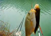 與其抱怨魚獲差,不如換一種釣法!