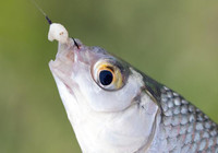 春季釣深水,該這樣作釣!