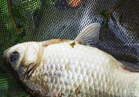 春季魚口輕,這些方法教你輕松應對!