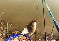 野釣鯽魚小魚太多該如何解決!