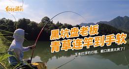 《白条游钓》农村大爷的鱼塘收费200,没人愿意钓,是没有鱼吗?