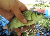 《戶外野釣視頻》水里有倒樹,樹邊都是單個鯽魚泡,果斷打窩釣魚!